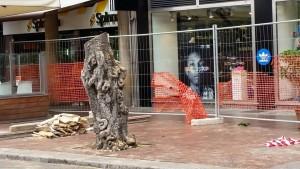 alberi politeama